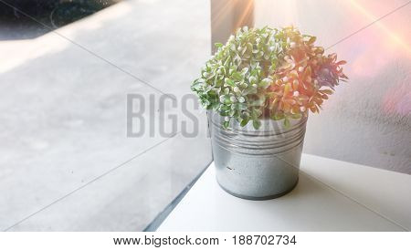 Little tree in pot.Decorative plant on white table with sun light and street floor background