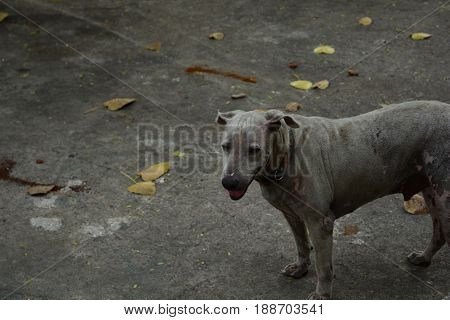 Dogs starving in fallow and stand on floor