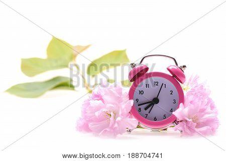 Pink Alarm Clock And Sakura Blossom Composition
