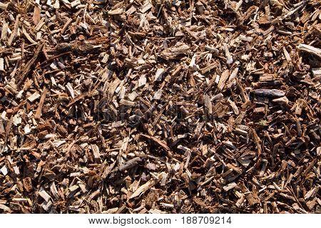 Closeup of oak chips from a felled oak tree.