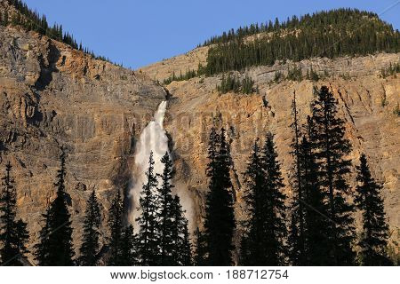 Takakkawa waterfall, Firs in the front, in Yoho National Park