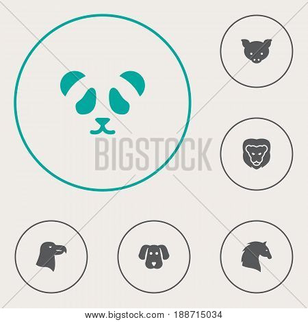 Set Of 6 Animal Icons Set.Collection Of Bear, Aquila, Hog And Other Elements.