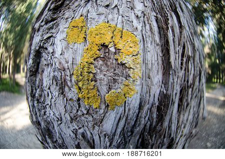 Lichens On The Trunk