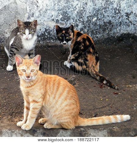 Street Cats in Or Yehuda Israel October 31. 2010