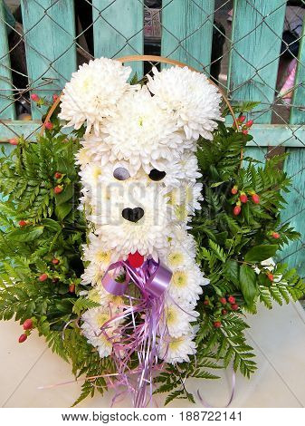 The chrysanthemum dog bouquet in Or Yehuda Israel October 21. 2010