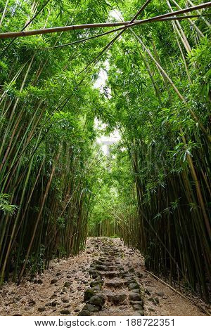 Path Through Dense Bamboo Forest, Leading To Famous Waimoku Falls. Popular Pipiwai Trail In Haleakal