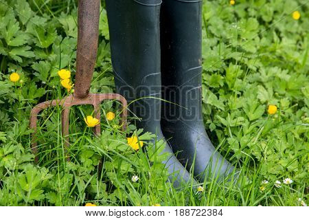 Old garden fork and rubber gardening boots with meadow flowers