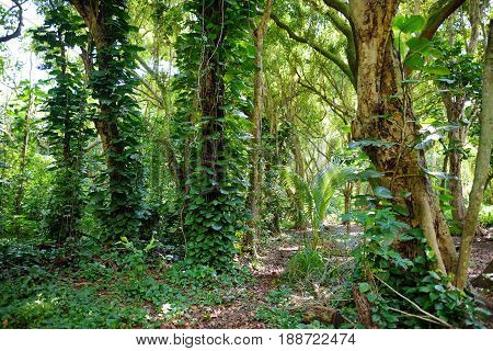 Lush Tropical Vegetation Of The Islands Of Hawaii