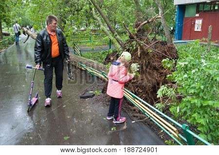 MOSCOW - MAY 29: Tree broken by a hurricane man and girl on Konenkova Street on May 29 2017 in Moscow. 11 people died during this hurricane.
