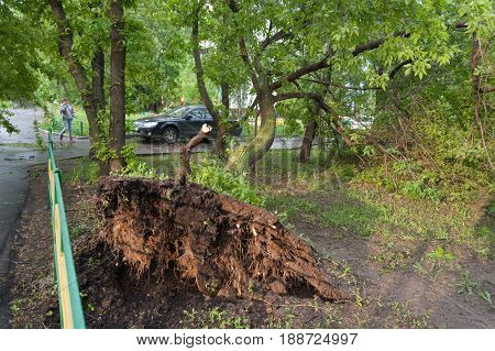 MOSCOW - MAY 29: Tree broken by a hurricane woman and car on Konenkova Street on May 29 2017 in Moscow. 11 people died during this hurricane.