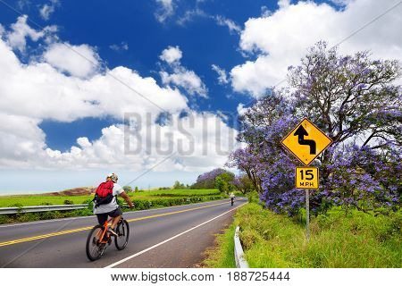 Beautiful Purple Jacaranda Trees Flowering Along The Roads Of Maui Island, Hawaii