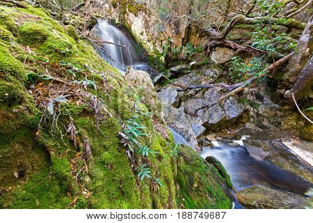Picturesque cascade of water named Crater Falls with moss-covered trunk in forest, part of Cradle mountain, Lake St Clair National Park. Autumn in Tasmania, Australia