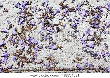 lavender and purple jacaranda flowers lay upon a white painted sidewalk on the ground. backgrounds and textures