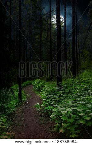 Pathway in forest at nighttime with moon