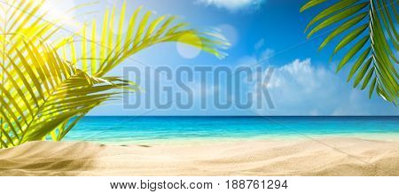 Beach background,Palm and tropic beach