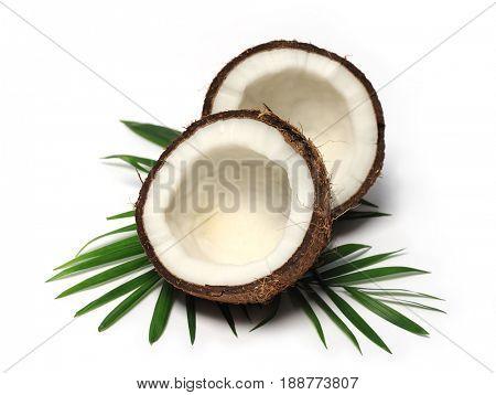 coconut close up