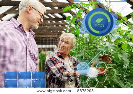 organic farming, gardening, agriculture, old age and people concept - senior woman and man growing tomatoes at greenhouse on farm