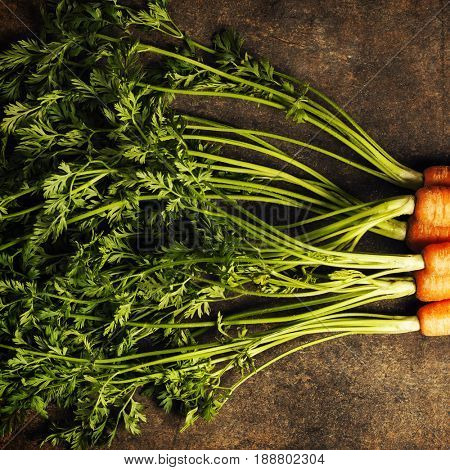 fresh carrots bunch on rustic background