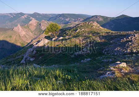 Summer landscape with a view of the mountain range. Lonely tree on the rocks. Sunny morning. Peninsula of Crimea, Ukraine