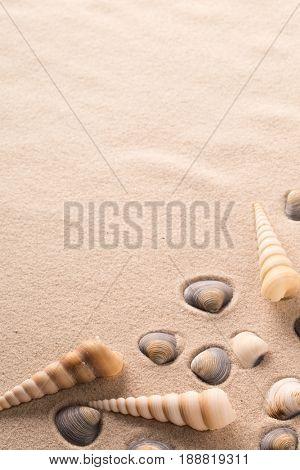 sea shells on sandy beach. Clams and spiral seashells ion sand background