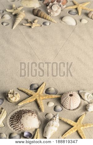 shellfish on sandy beach. Seastar or starfish with clamms and other shellfish on a sand background