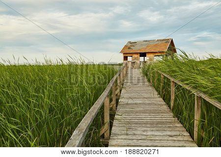 Swampland walkway with hut (Lake Tisza, Hungary)