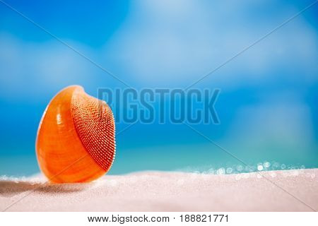 tropical red seashell sea shell with ocean , beach and seascape, shallow dof