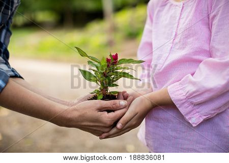 Mid section of grandmother and granddaughter holding sapling in garden