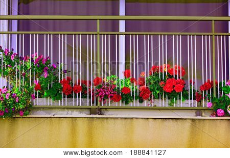 Bright flowers on the balkony