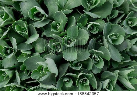 Creative natural layout made of green leaves. Flat lay. Nature concept