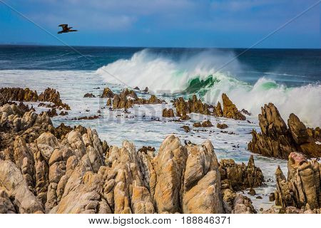 Cormorant flies over the water. Powerful ocean surf is beating against a rocky shore. Boulders Penguin Colony in the Table Mountain National Park, South Africa. The concept of ecotourism