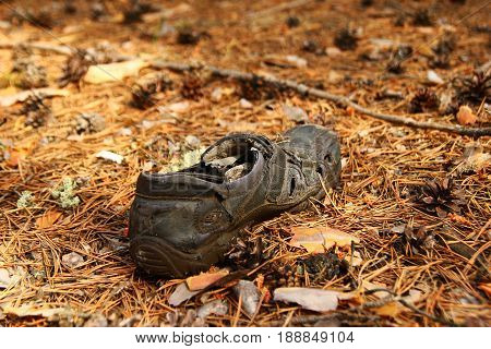 Russia Siberia. Old shoe on a grass in a forest.