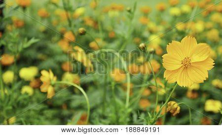 beautiful vintage flowers soft focus no background
