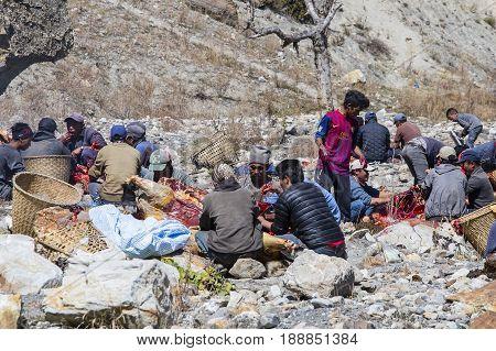 HIMALAYAS ANNAPURNA REGION NEPAL - OCTOBER 17 2016 : Tibetan butcher men butchering yak carcasses for sale in the local market