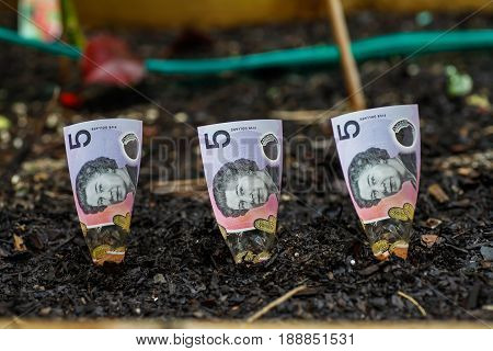 Three Australian $5 dollars planted in garden bed