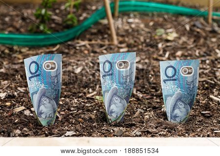 Three Australian $10 dollars planted in garden bed