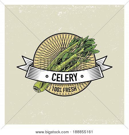 Celery Vintage set of labels, emblems or logo for vegetarian food, vegetables hand drawn or engraved. Retro farm american style