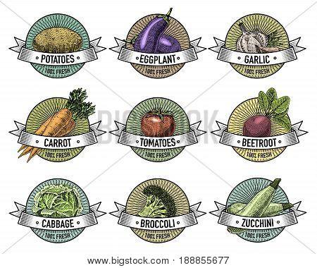 Vintage set of labels, emblems or logo for vegeterian food, vegetables hand drawn or engraved. Retro farm american style. .