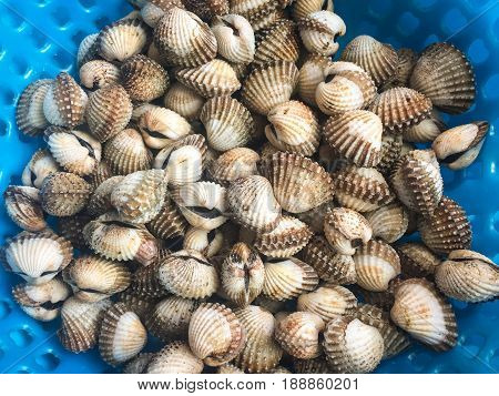 Freshly Harvested Clams At A Market In Vietnam