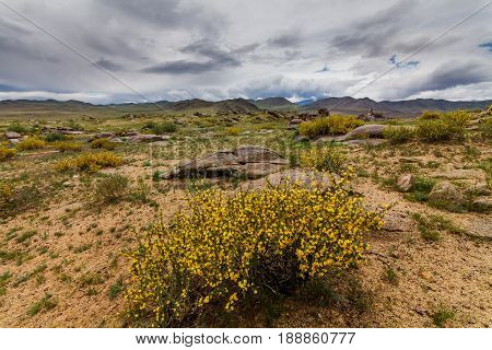 Blooming desert with clouds. Arizona, United States