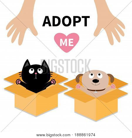 Human hand. Adopt me. Dog Cat inside opened cardboard package box. Ready for a hug. Puppy pooch kitten cat looking up to heart. Pet adoption Flat design Help animal concept White background. Vector