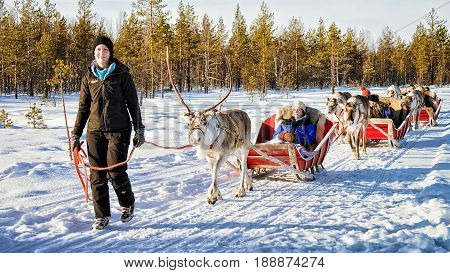 People At Reindeer Sled Caravan Safari In Winter Forest Rovaniemi