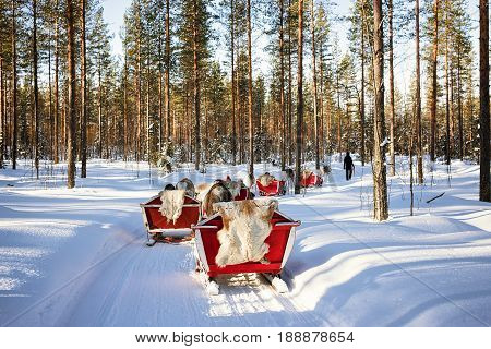 People At Reindeer Sleigh Caravan Safari In Forest Finnish Lapland