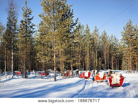 People At Reindeer Sledge Caravan Safari In Forest Finnish Lapland