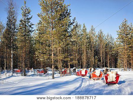 People at Reindeer sledge caravan safari in winter forest in Rovaniemi Finnish Lapland poster