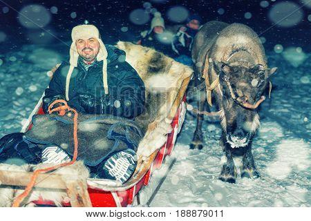 Man On Reindeer Sledge At Night Safari In Lapland Finland