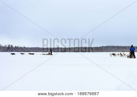 Husky Dogs Sledge At Frozen Winter Lake In Lapland Finland