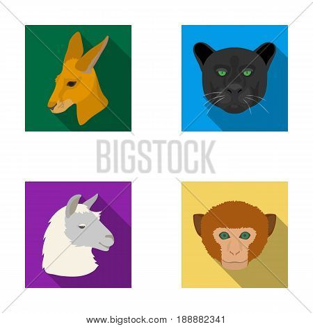 Kangaroos, llama, monkey, panther, Realistic animals set collection icons in flat style vector symbol stock illustration .