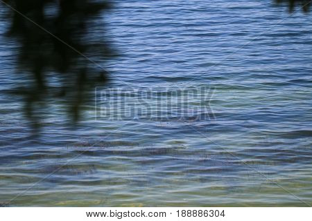 The purest water of Salt Bafa Lake - Mugla - Turkey. Latmos.