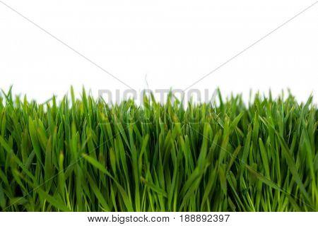 Close-up of green grass mat